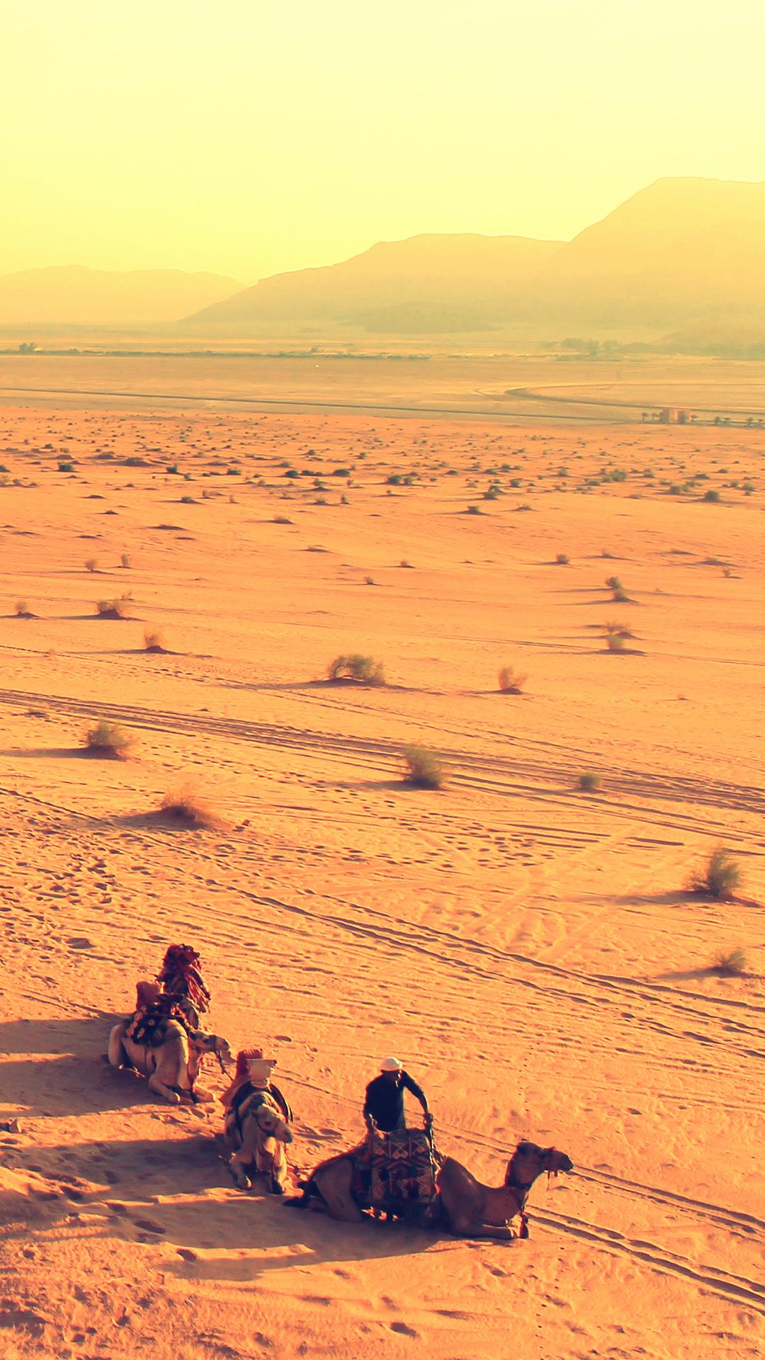 Desert Camel Iphone Wallpaper Hd
