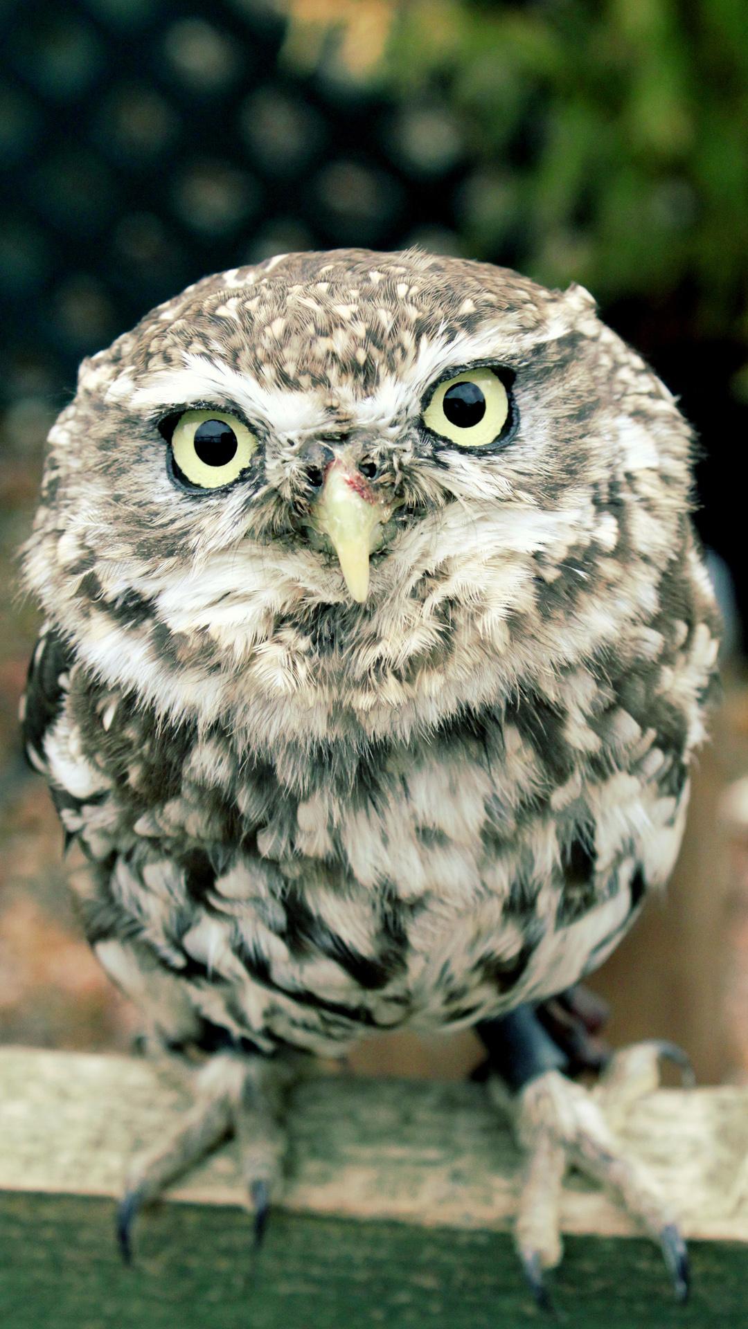 Download Cute Owl Wallpaper IPhone 6 750x1134 1080x1920
