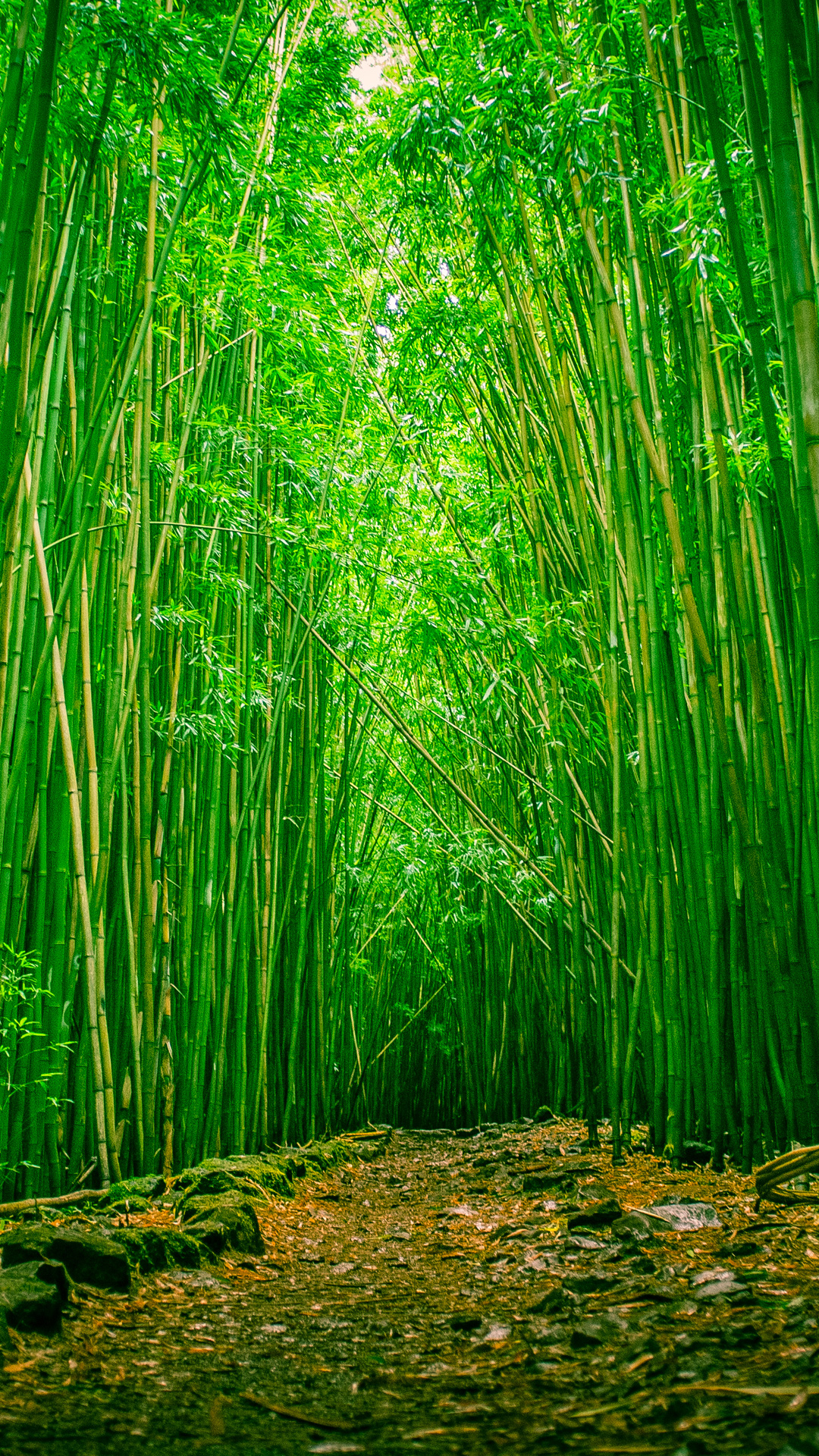 Bamboo Forest Iphone Wallpaper Hd