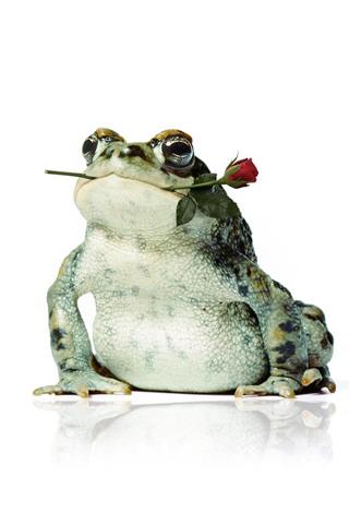 Frog Rose