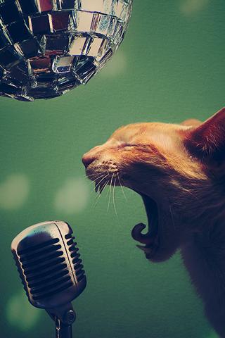 Singer Cat