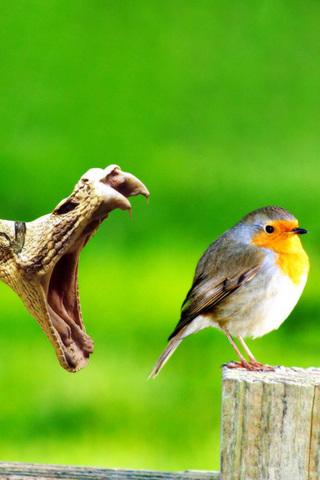 Bird and Snake