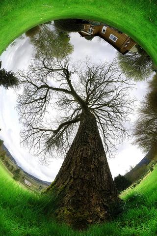 Natures Dream