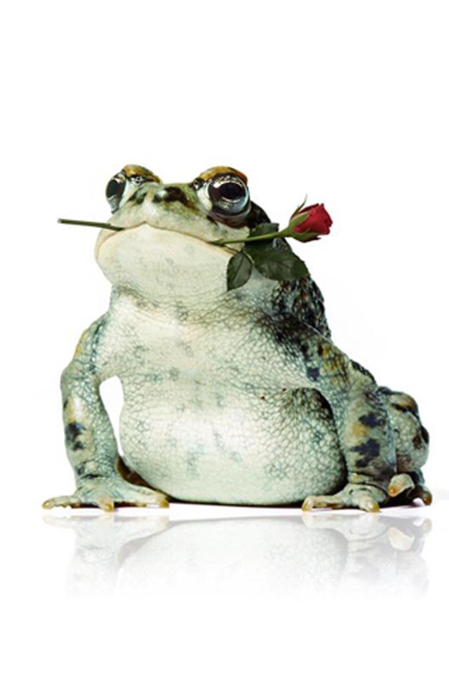 Frog Rose Wallpaper