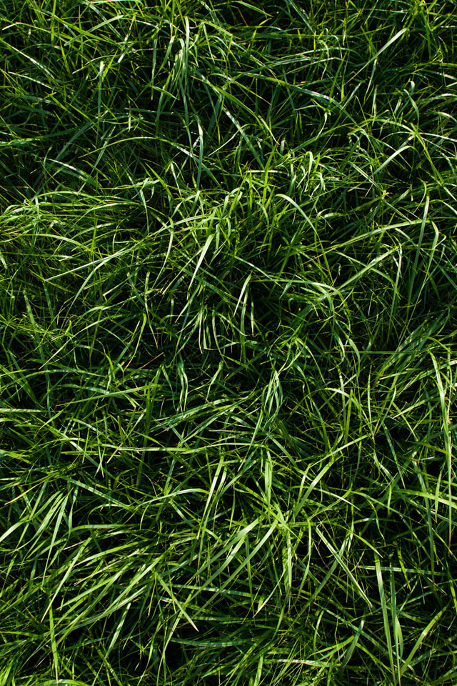 Deep Grass Wallpaper