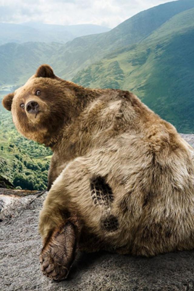 Bear Print Iphone Wallpaper Hd