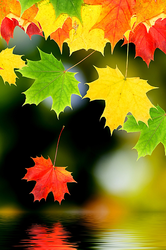 fall iphone wallpaper autumn leaf iphone wallpaper hd 2789