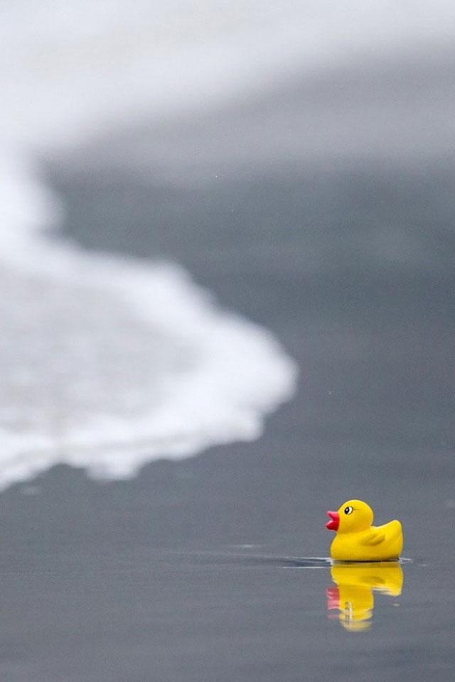 Rubber Ducky Wallpaper