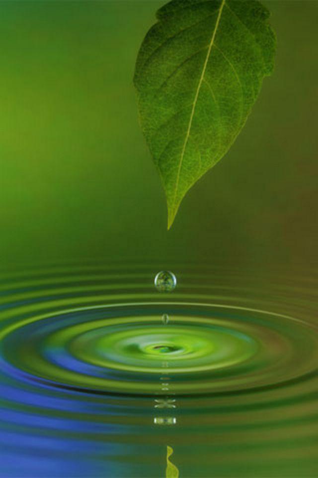 Water Leaf Wallpaper