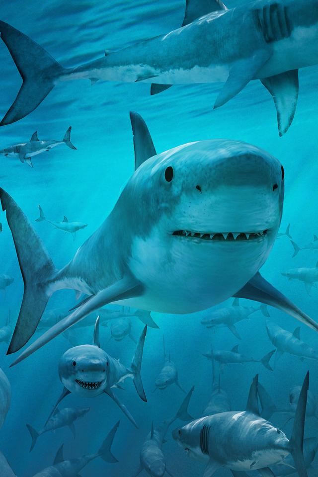 Shark Frenzy Wallpaper