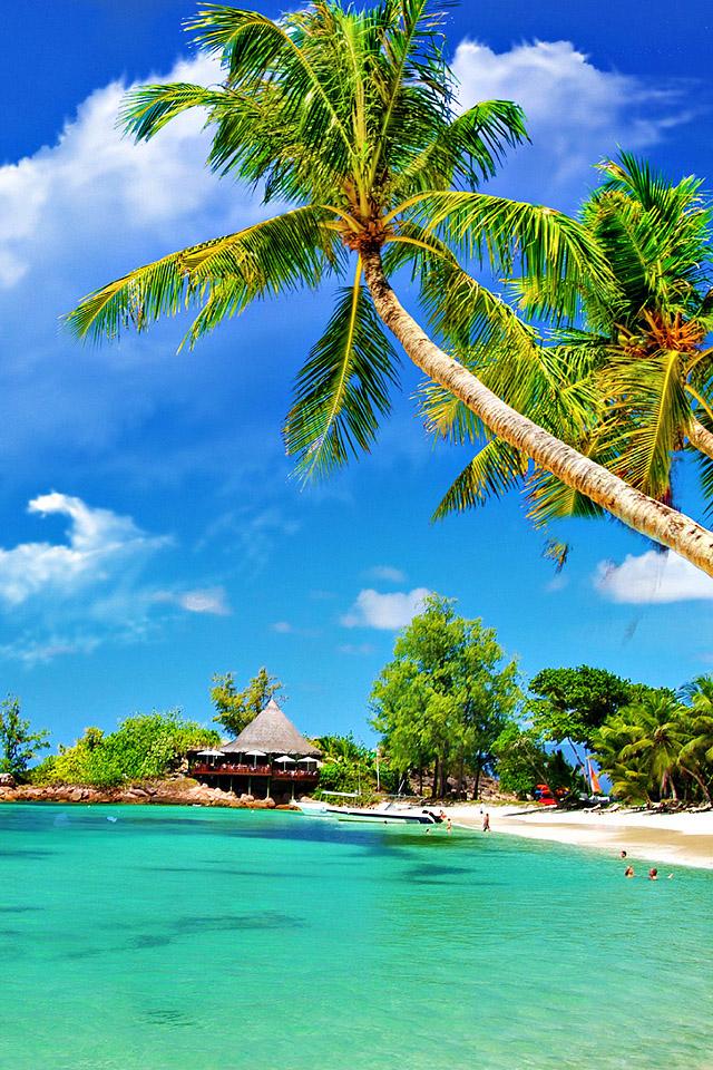 Tropical Palm Beach Wallpaper
