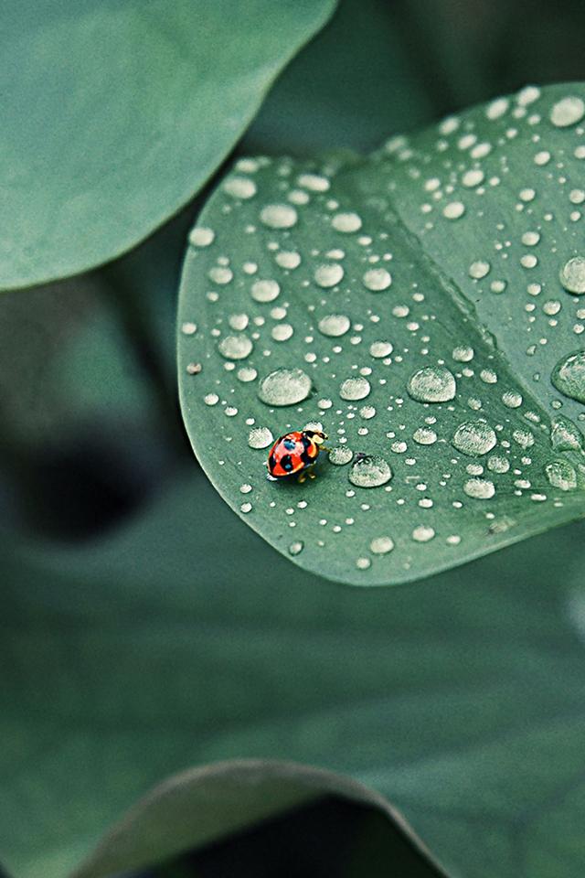 Ladybug Leaf Wallpaper