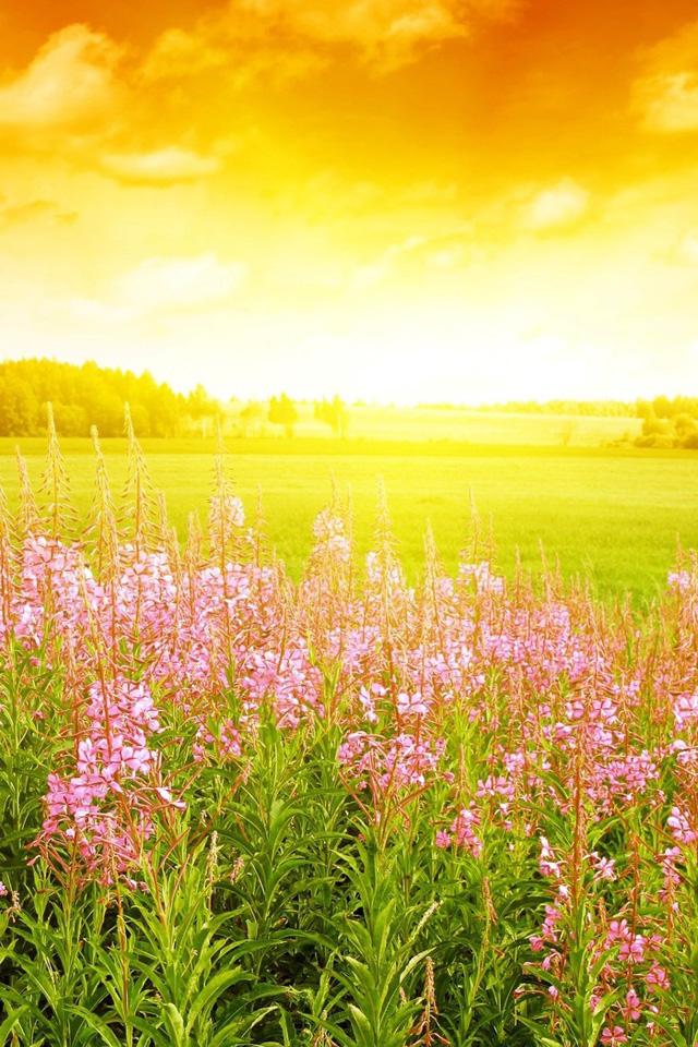 Spring Sunshine Wallpaper