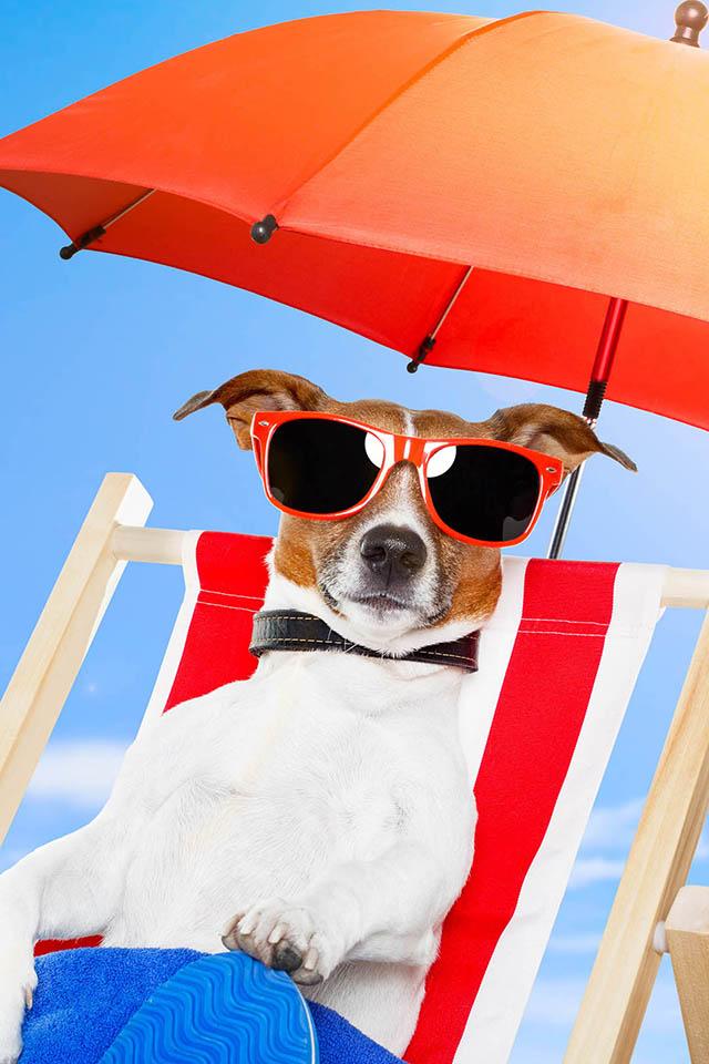 Summer Dog Wallpaper