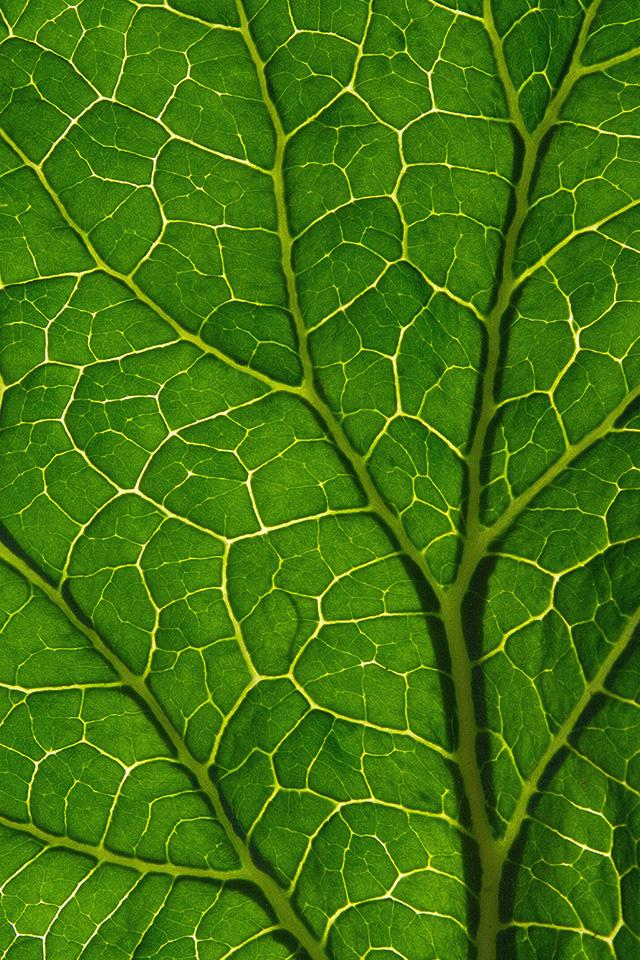 Leaf Texture Wallpaper