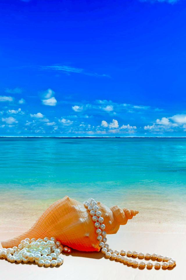 Beach Shell Wallpaper