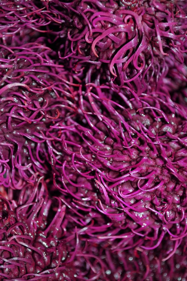 Purple Mesh Wallpaper