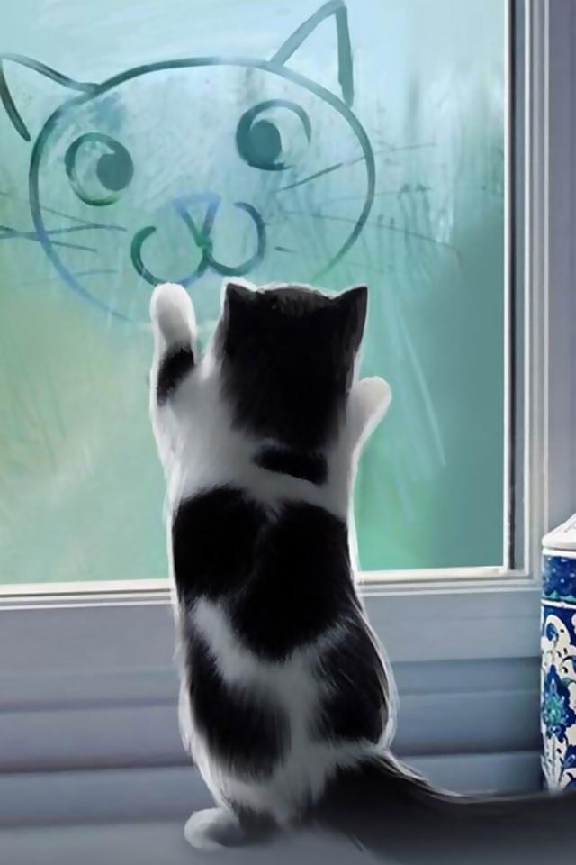 Cute Cat iPhone Wallpaper HD