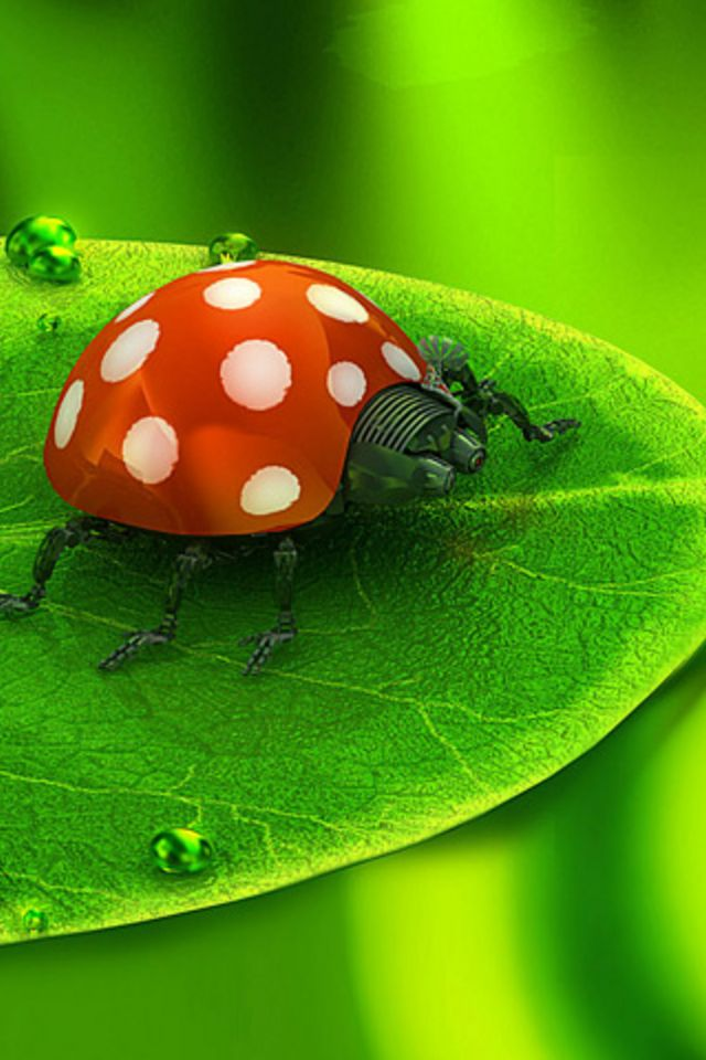 Ladybug Wallpaper