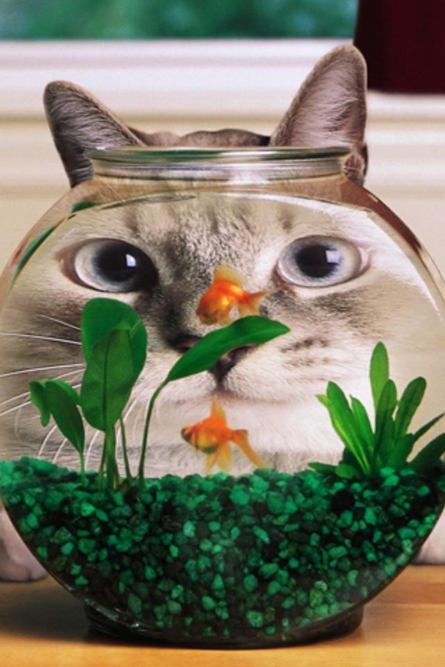 Cat Bowl Wallpaper