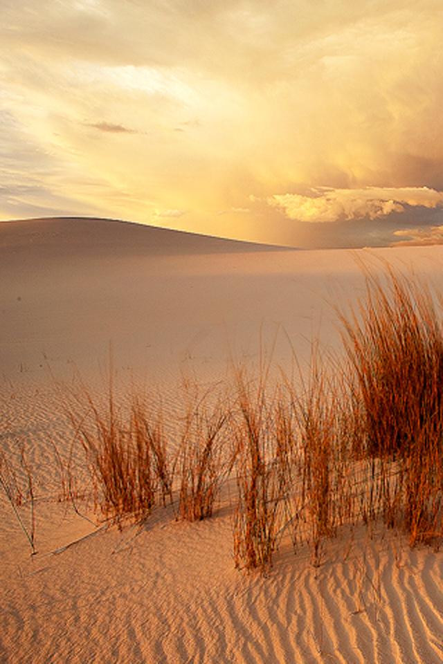 Desert Shine Wallpaper