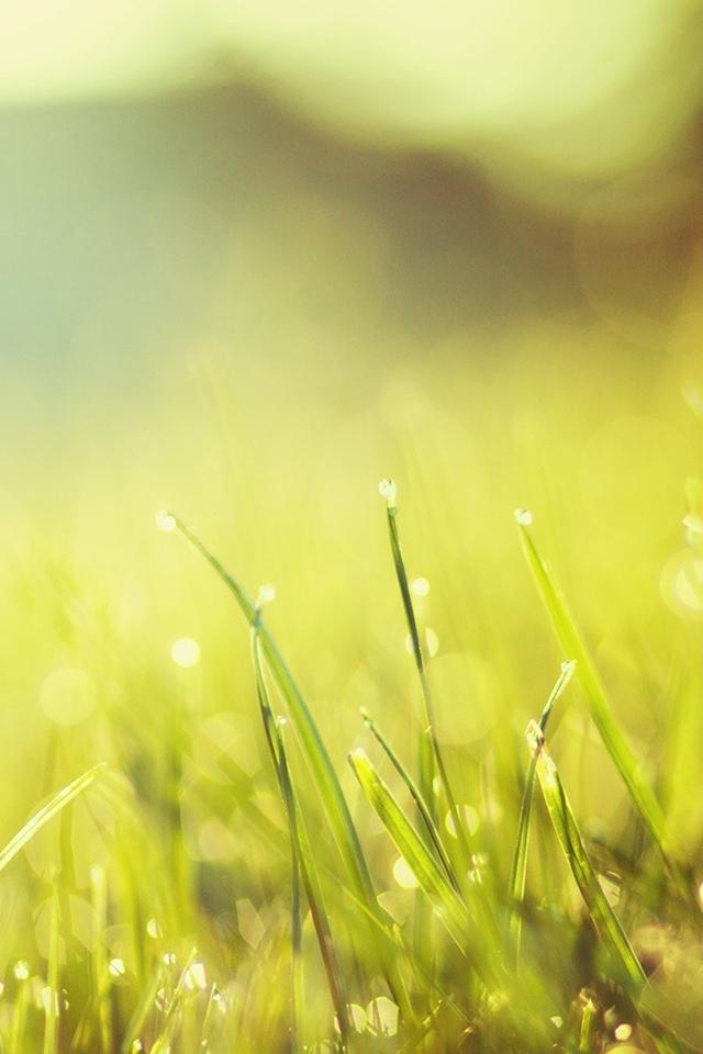 Grass Bokeh Wallpaper