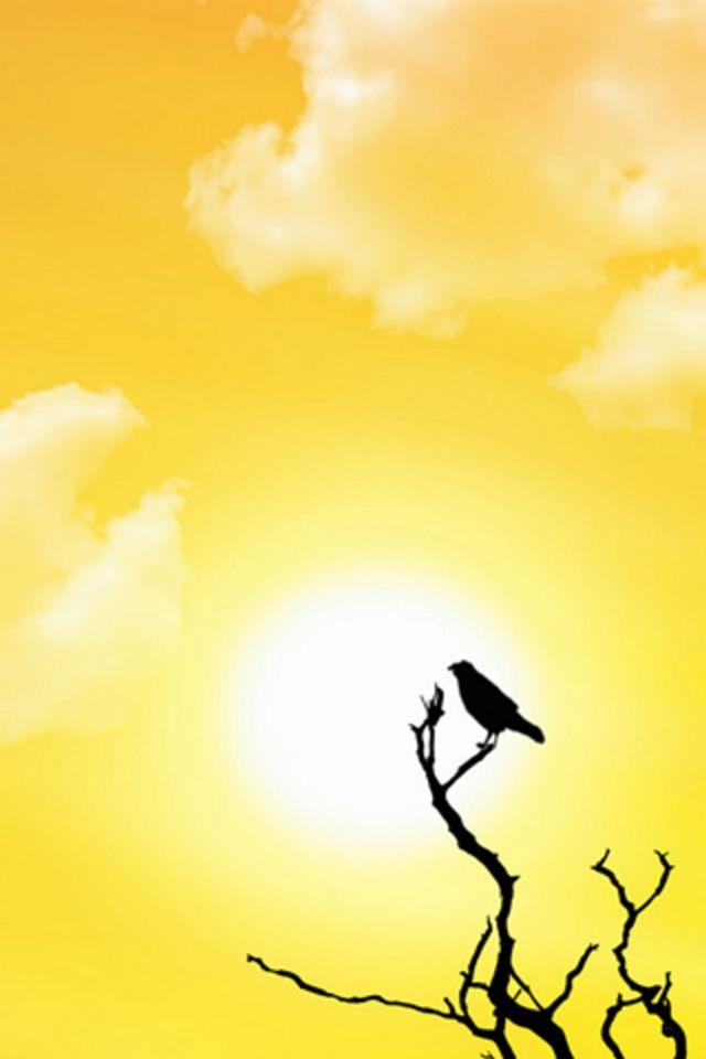 Sun Bird Wallpaper