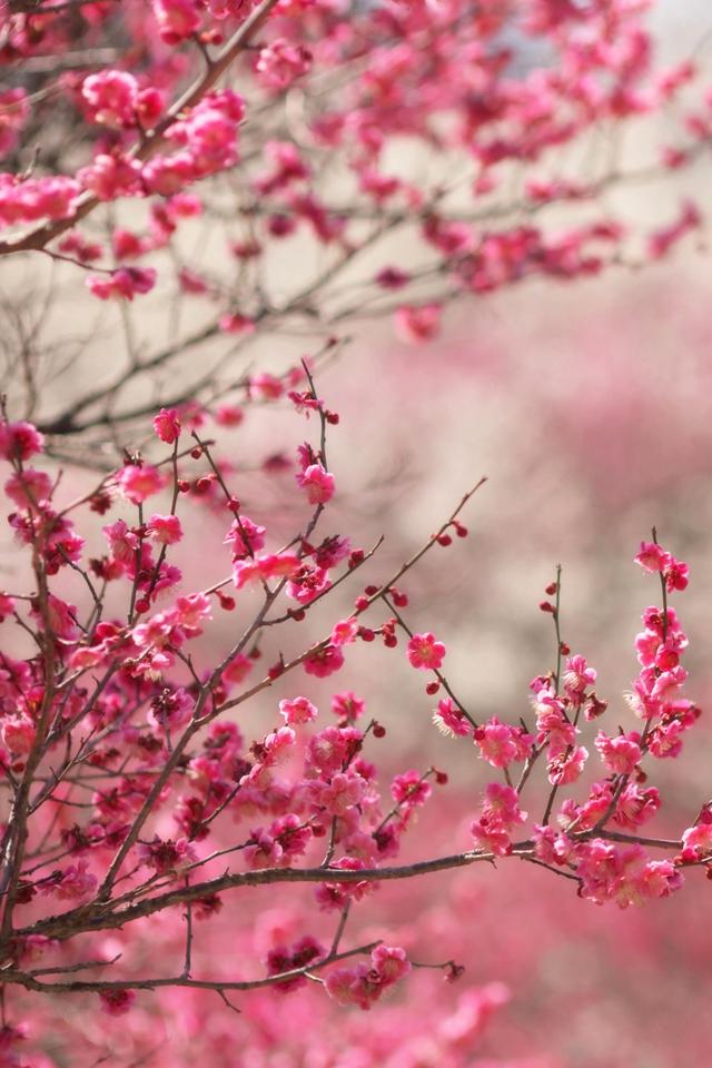 Pink Peach Wallpaper