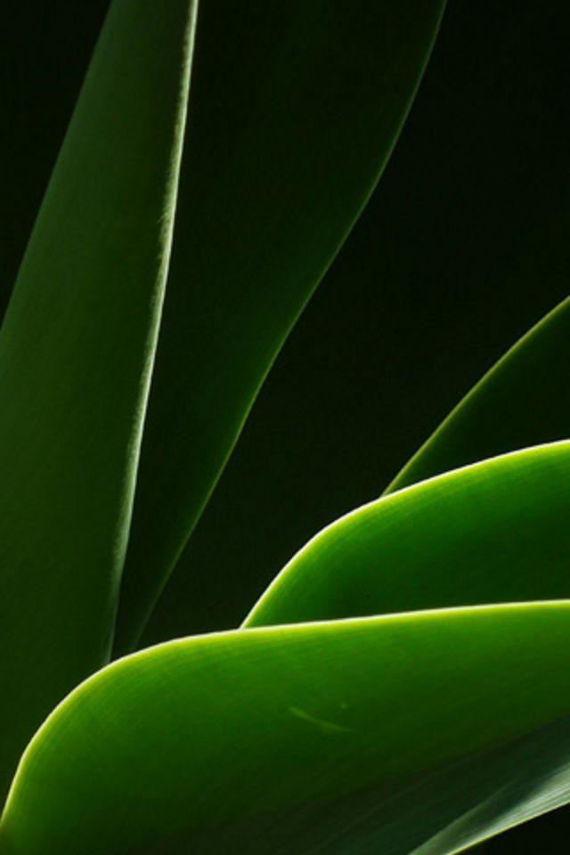 Leaf Glow Wallpaper