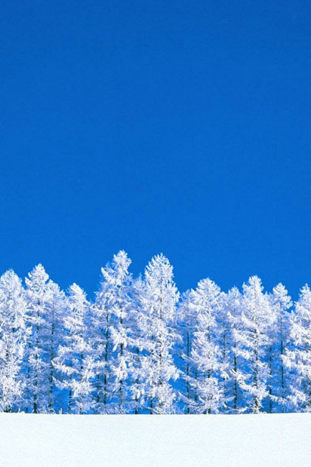 Winter Trees Wallpaper