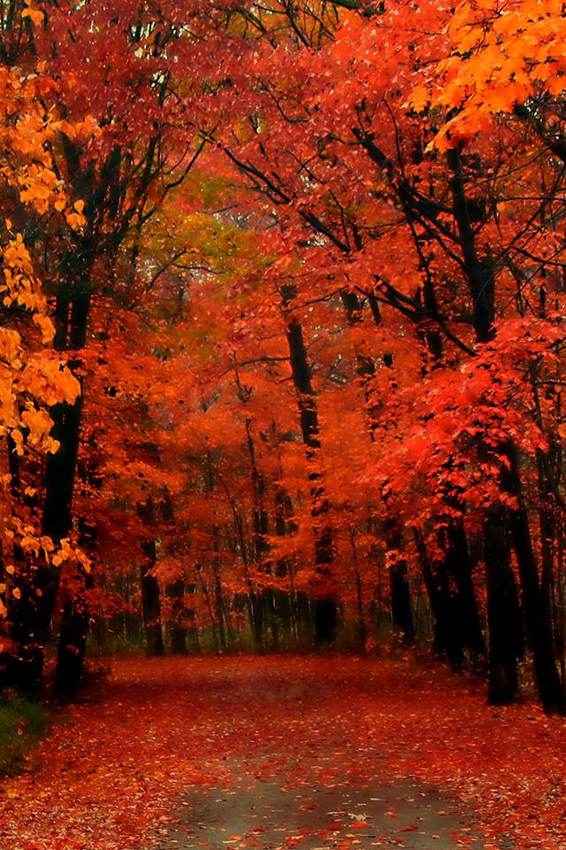 Red Autumn Wallpaper