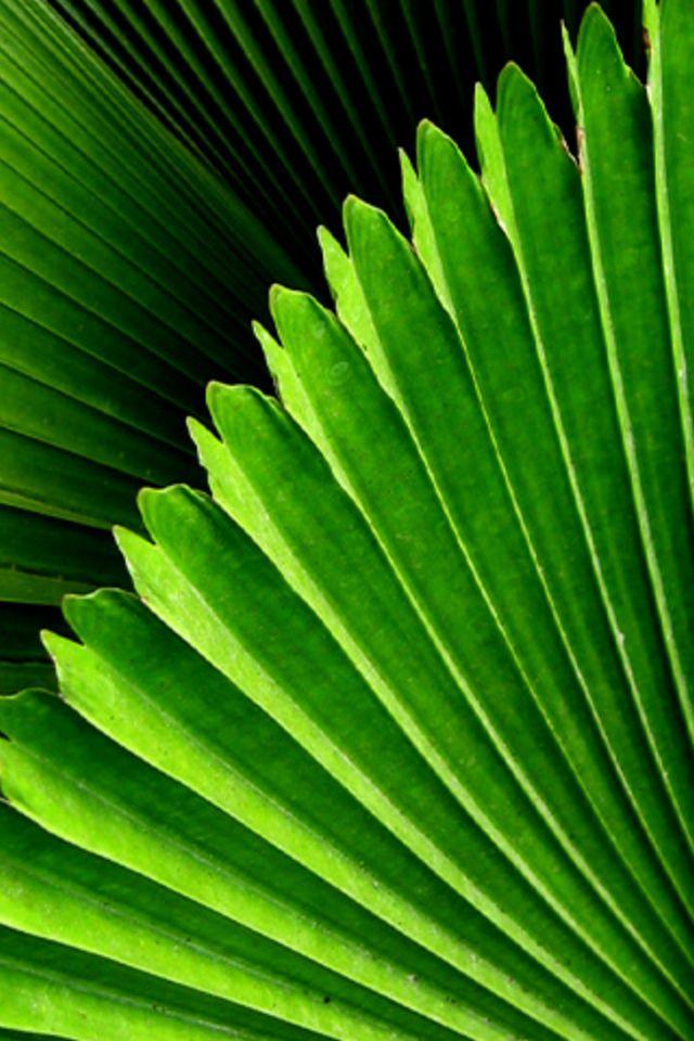 Closeup Leaves Wallpaper