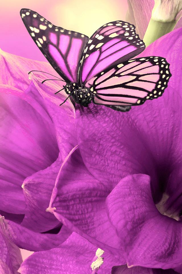 Girly Butterfly Wallpaper