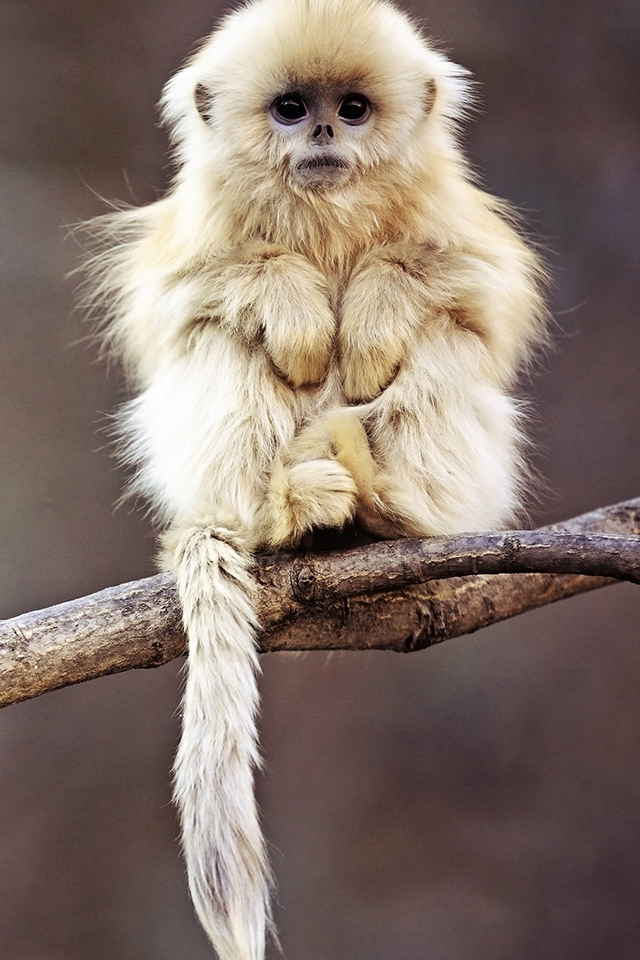 Cute Monkey Wallpaper