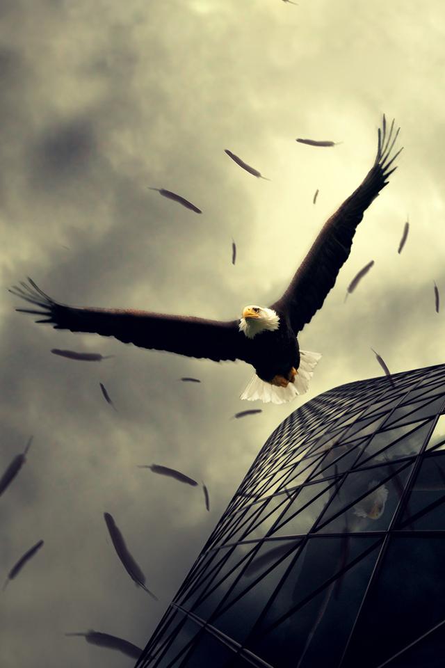 Eagle Rush Wallpaper