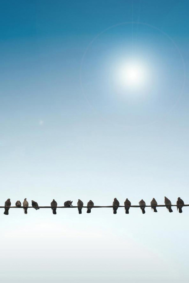 Birds on Wire Wallpaper