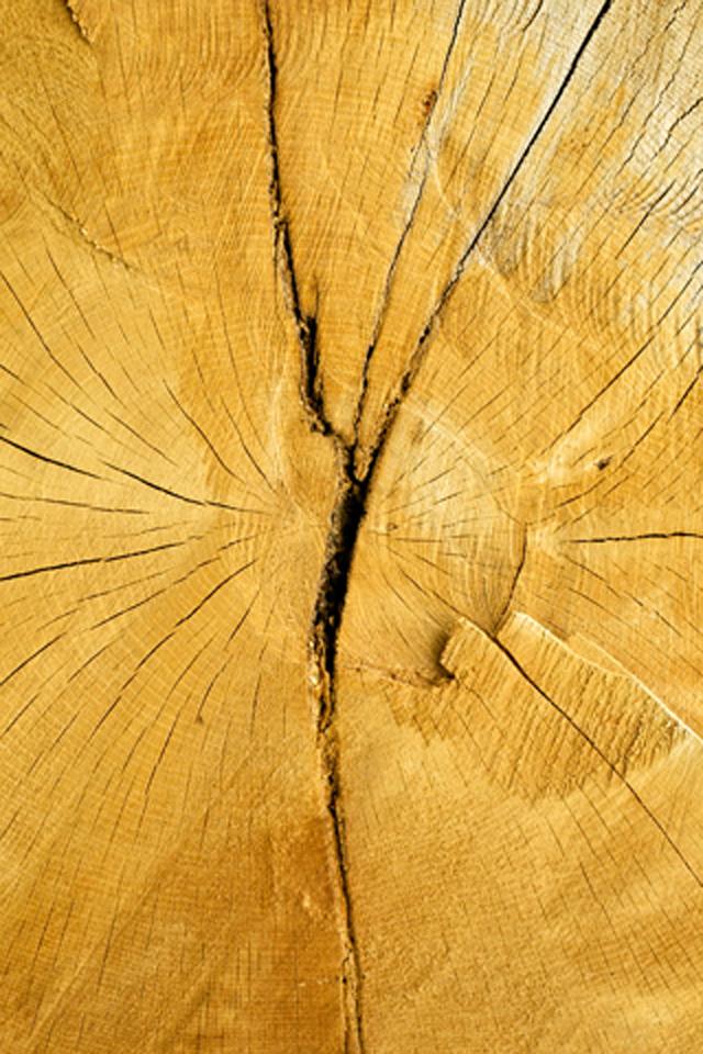 Tree Cut Wallpaper