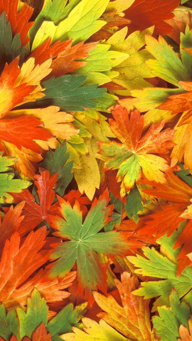 Fall Leaves iPhone Wallpaper HD