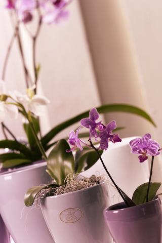 Pink Vase Flowers