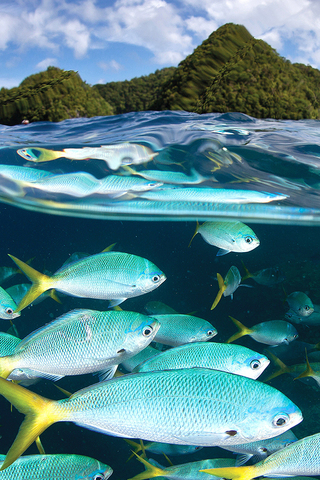 Malakal Fish