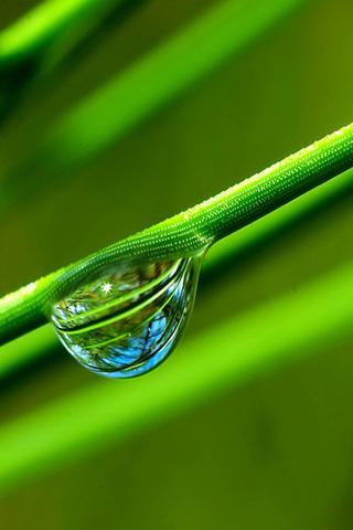 Stem Waterdrop