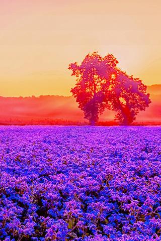 Bright Nature