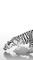 Tiger BW