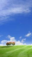 Summer Landsca...