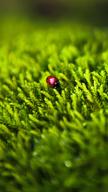 Ladybug on Gra...