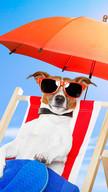 Summer Dog