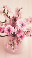 Soft Pink Flow...