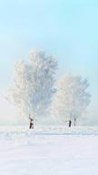 Frozen Landsca...