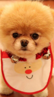 Xmas Puppy