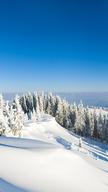 Winter Landsca...